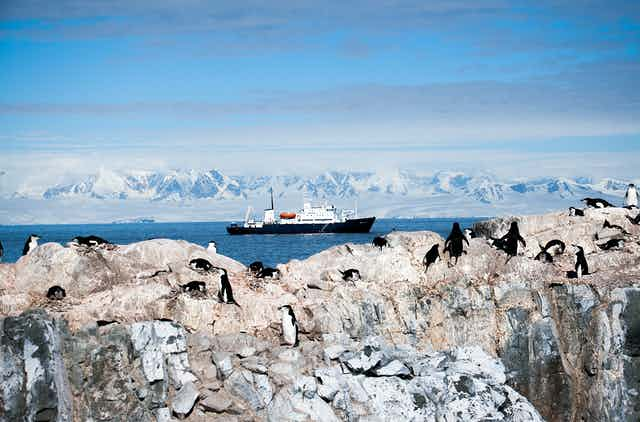 Chin strap penguins on a cliff near a cruise ship
