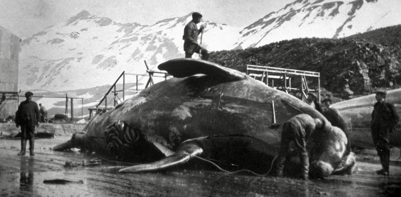 200 years ago, people discovered Antarctica – and promptly began profiting by slaughtering some of its animals to near extinction