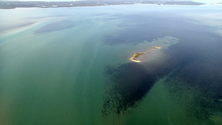 Aerial photo of restored seagrass beds