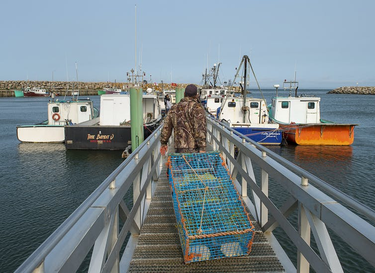 A man hauling a lobster trap down a ramp to waiting boats.