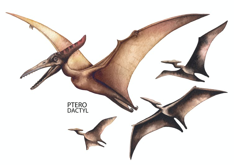 Watercolour illustration of four pterodactyls in flight.