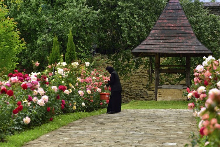 A monk tends to a rose garden at Probota Monastery, Bukovina, Romania