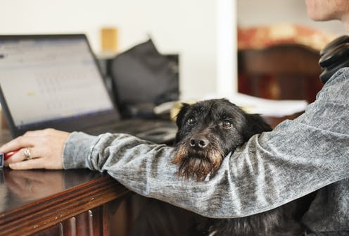 A dog sits in its owners lap and rests its chin on her arm. She is working on a computer.