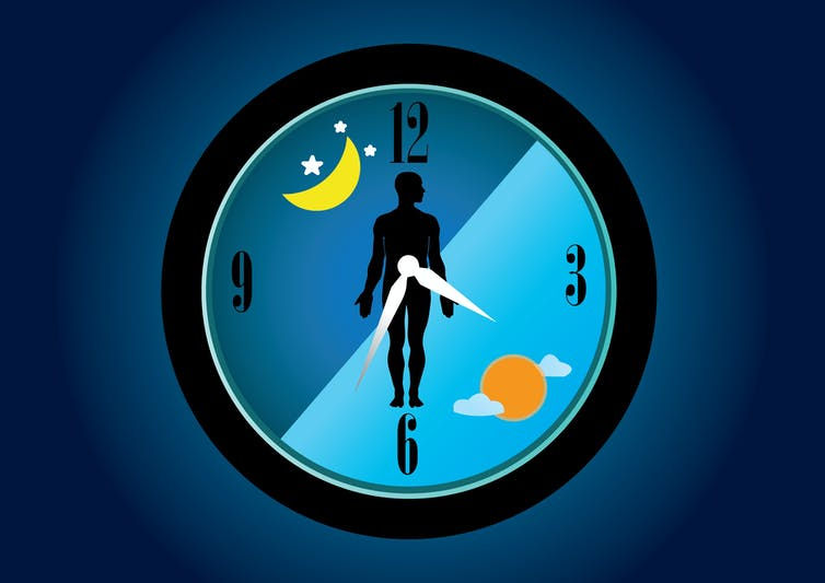 Our body is controlled by internal 'clocks' which regulate all our body's functions.