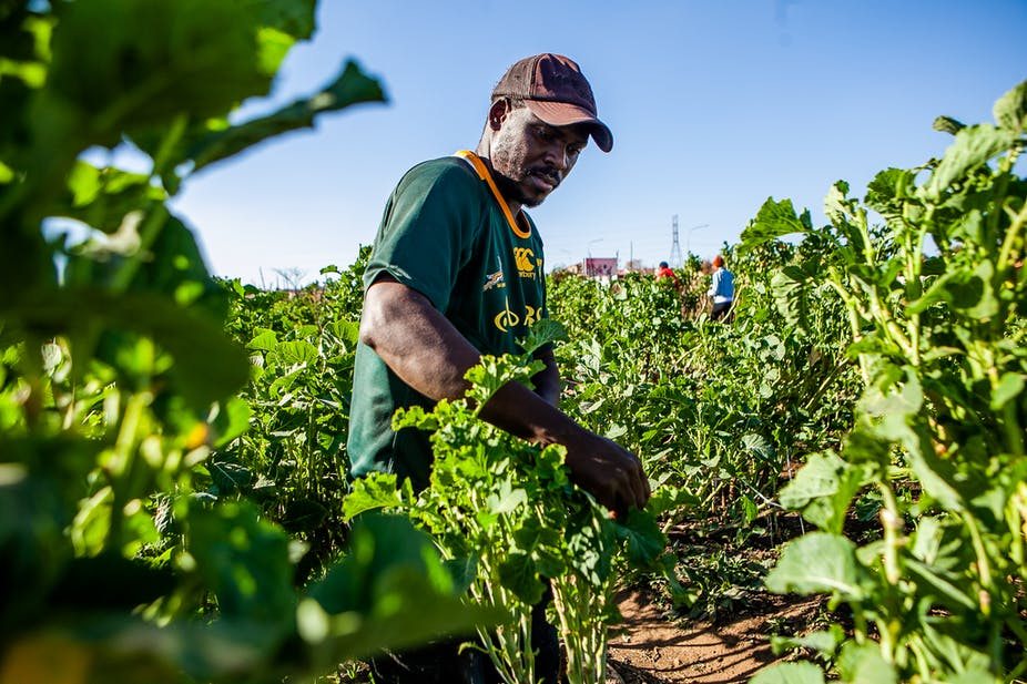 Problematic Assumptions Raise Questions About South Africa S New Land Reform Plan