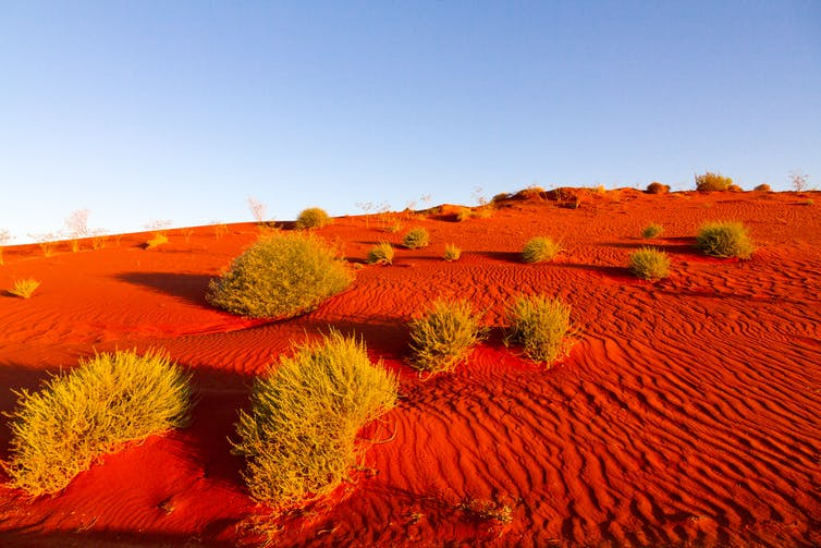Red sand and tussocks of grass