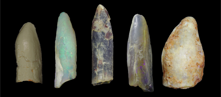 Colourful opal fossils point to a diverse group of giant dinosaurs that shared Australia's terrain