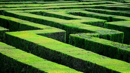 The image shows a hedge maze.