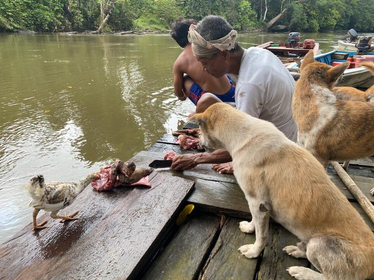 A man chops some meat beside a river as a dog and chicken eye up the meat