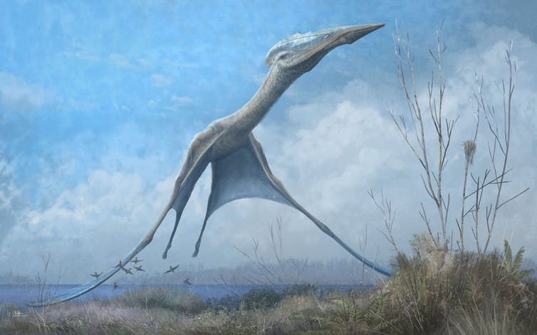 Illustration of giant pterosaur in flight.