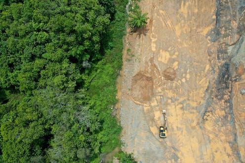 Vista aérea de un bosque, con la mitad derecha deforestada.