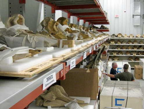 animal bones on storage shelves