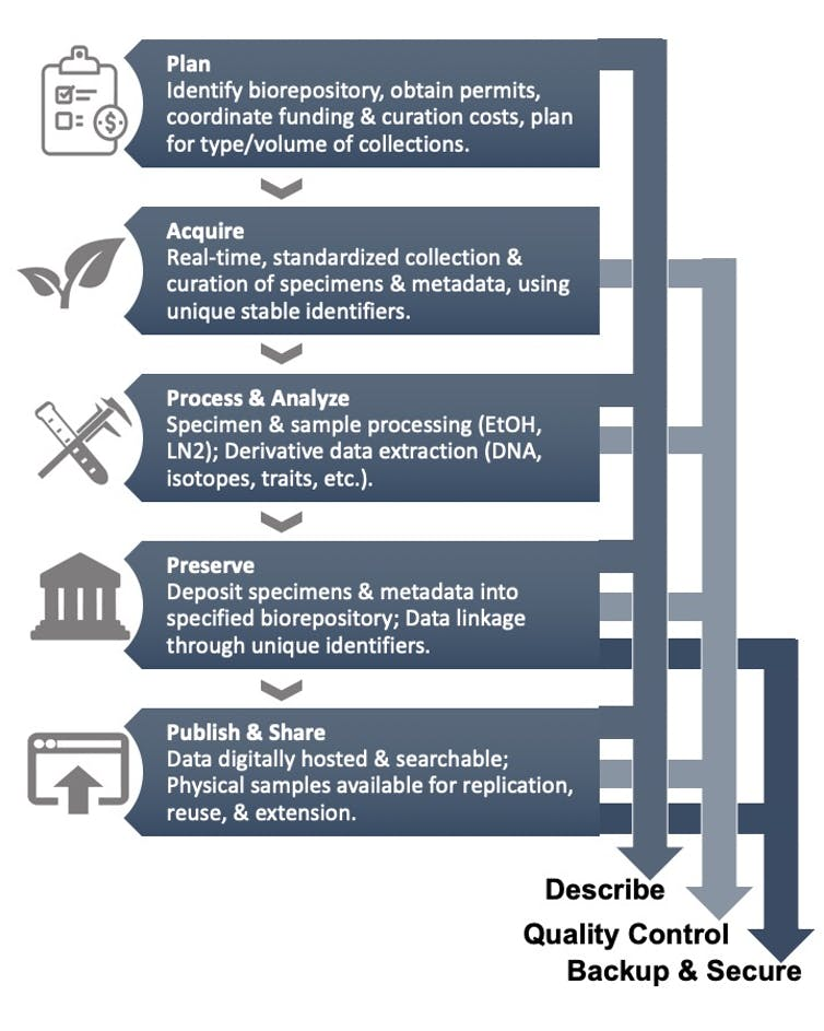 diagram of steps required to archive biological samples