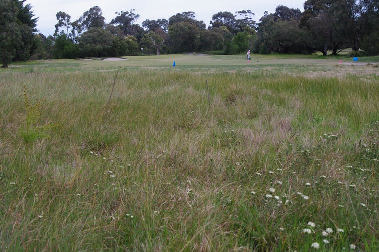 Grasses, native flowers and trees at a golf course