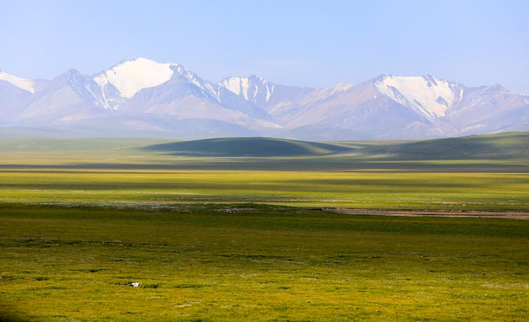 Flat grassy land with snowy mountains in the background