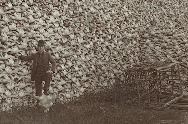 Man stands in front of pile of bison skulls with his foot resting on a buffalo skull; rustic cage is at foot of pile.