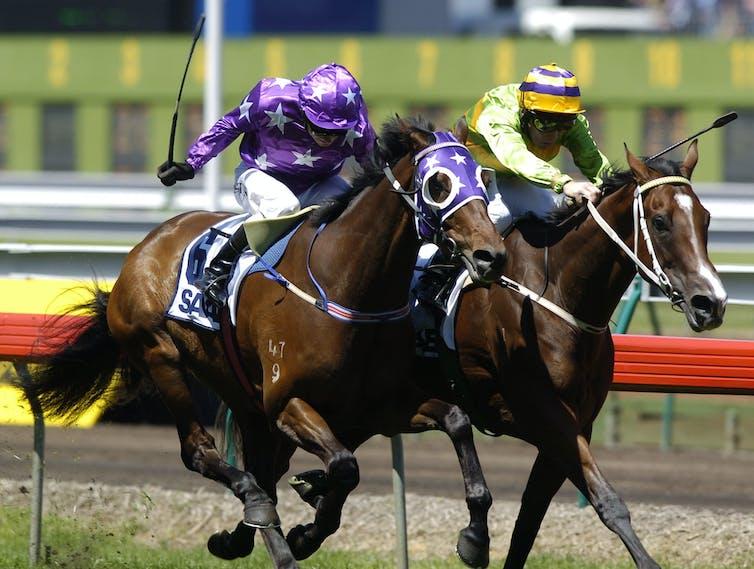 Jockeys and horses mid-race.