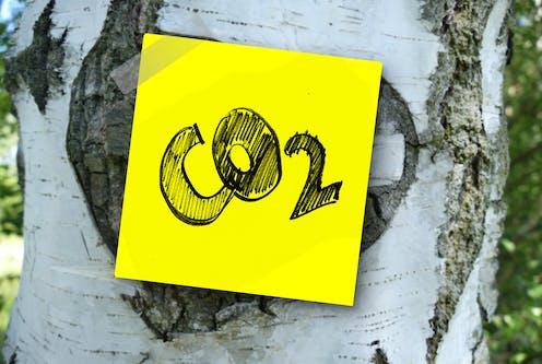 Kertas dengan tulisan CO2 ditempelkan pada batang pohon,