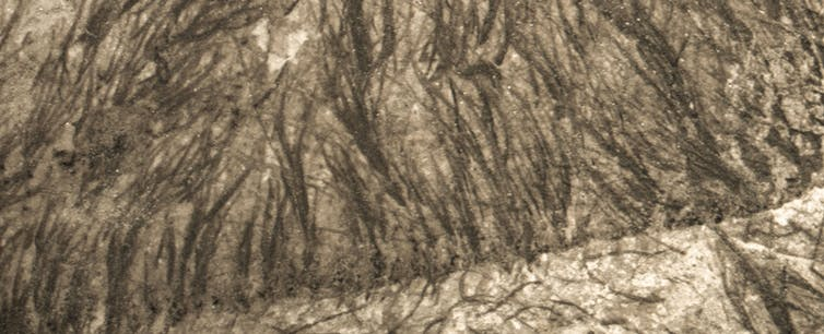 Close up of fossilised filaments.