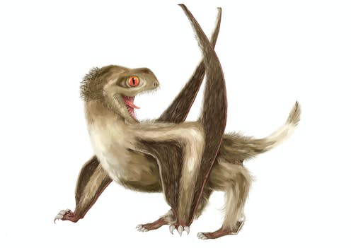 Illustration of small, fluffy, four-legged winged creature.