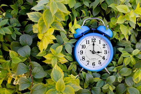an alarm clock framed by green leaves