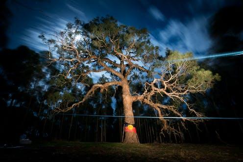 Djap Wurrung Birthing Tree