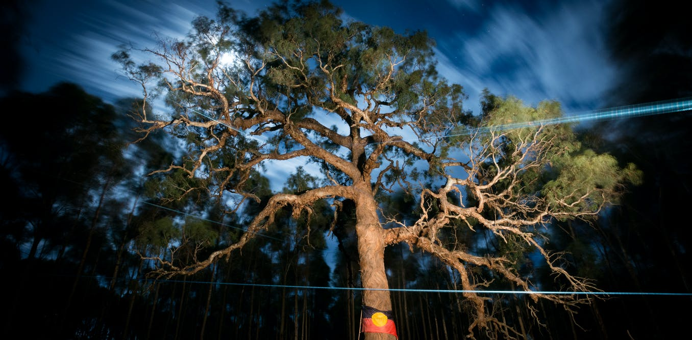 An open letter from 1,200 Australian academics on the Djab Wurrung trees