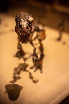Model of a dinosaur.