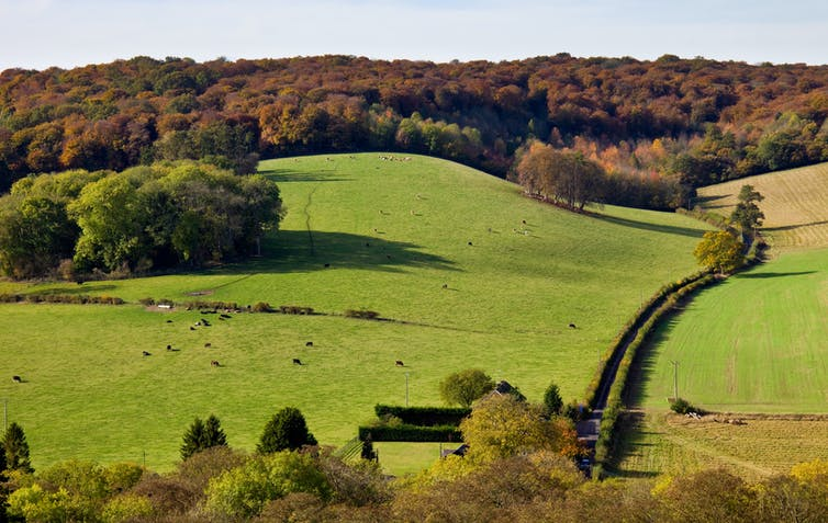 Rolling farmland with a wood at the top of a hill.