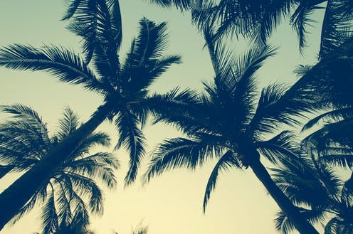 Palm trees seen from below in silhouette against a musky green sky.