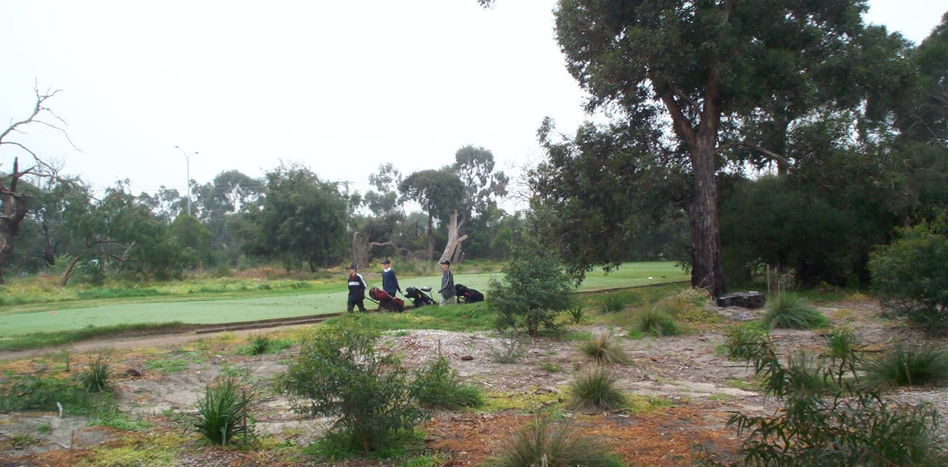 Urban golf courses are biodiversity oases. Opening them up puts that at risk