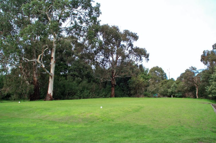 Looking from the golf tee across the fairway with trees either side.