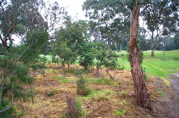 revegetation area at golf course