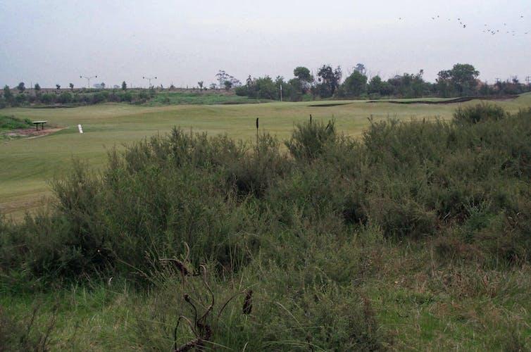 Patch of heath next to golf course fairway