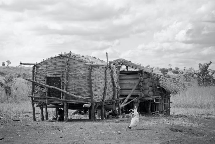 Two rustic structures of logs and woven sticks with a rooster pecking at the earth in the foreground and a grassy veld in the background.