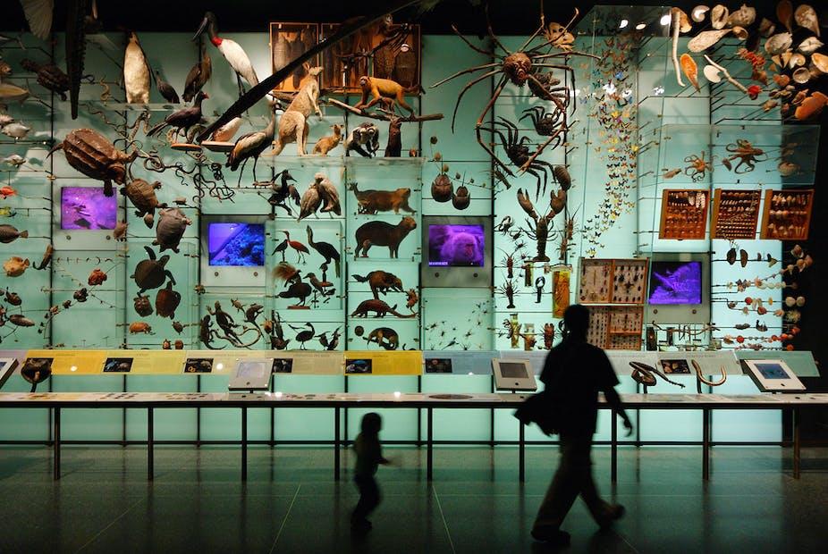 Un enfant et un adulte défilent dans les galeries d'un muséum d'histoire naturelle