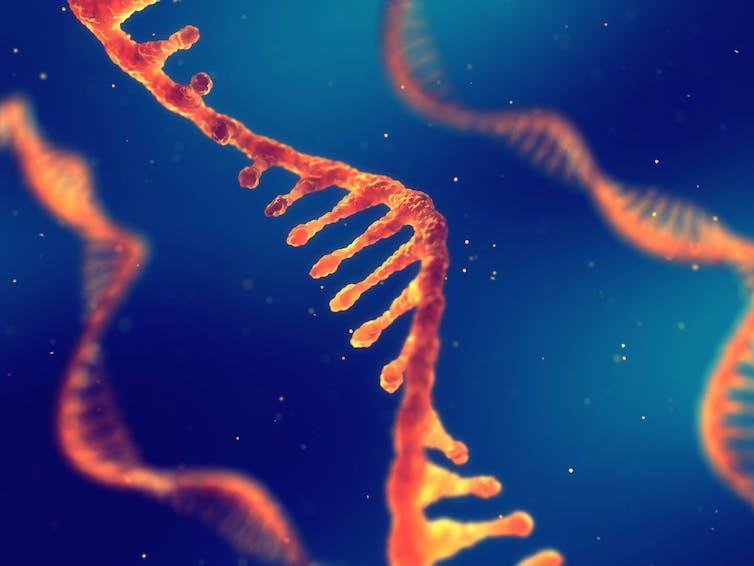 Illustration of single-stranded RNA