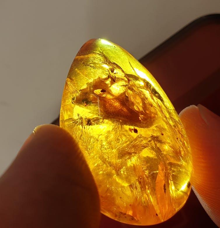 Specimen preserved in amber.