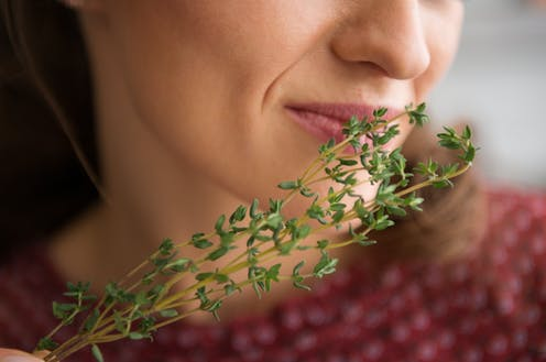 A woman smelling a sprig of thyme.