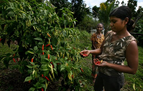 A woman looks at a red chili.