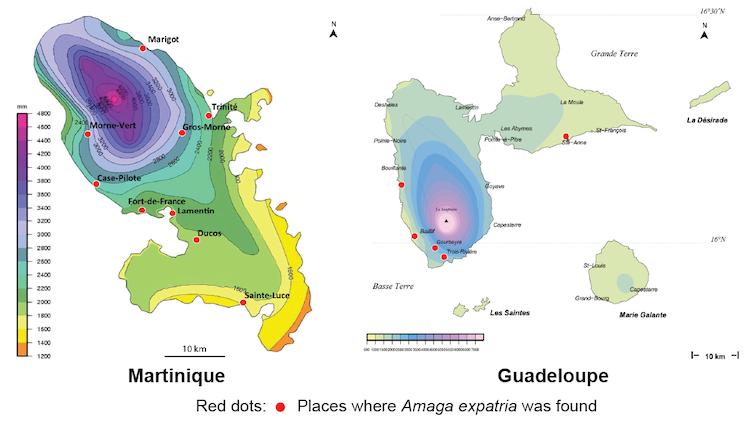 Amaga expatria, map