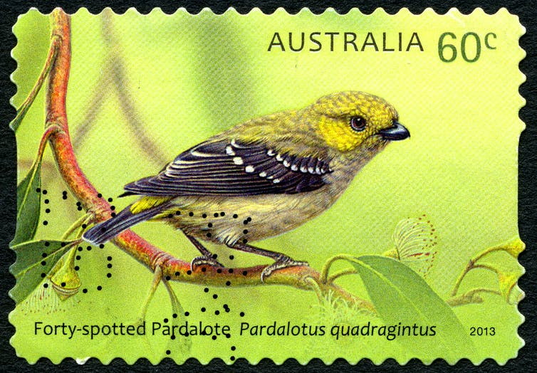 Friday essay: in praise of pardalotes, unique birds living in a damaged country