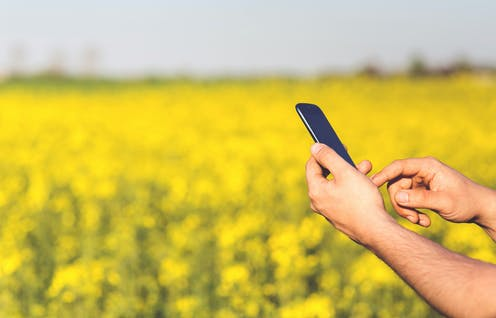 A man's hands are seen holding a smartphone in a canola field.