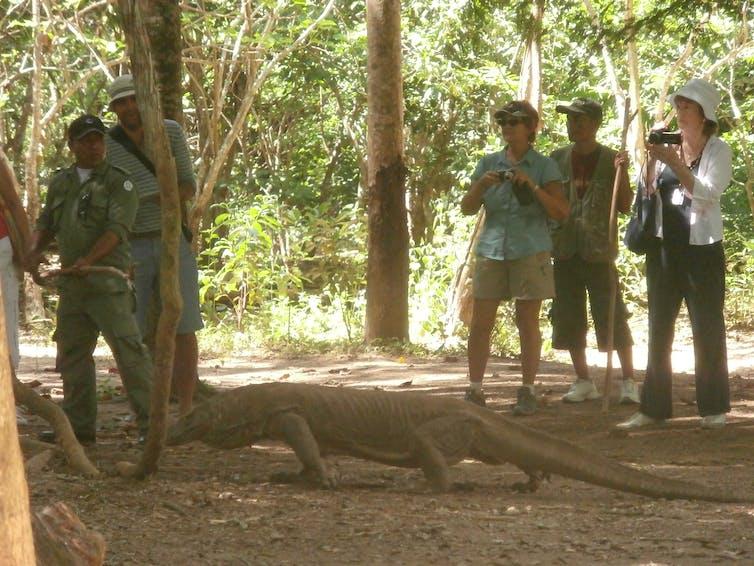 Wisata komodo di Loh Liang, Pulau Komodo, NTT, 2014