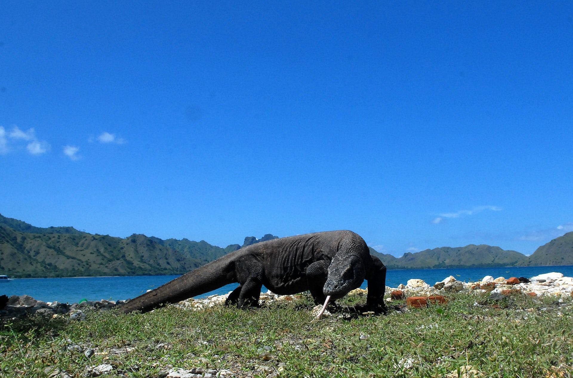 3 hal yang perlu diperhatikan dalam pembangunan Taman Nasional Komodo