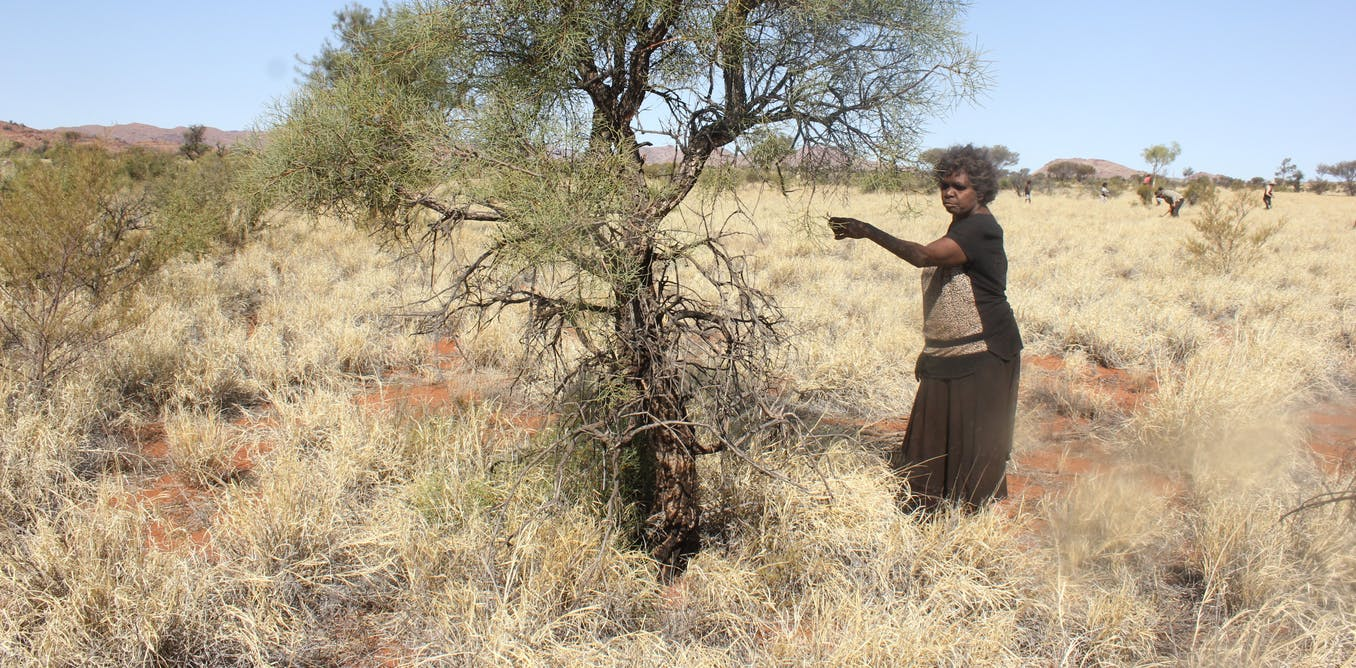 The buffel kerfuffle: how one species quietly destroys native wildlife and cultural sites in arid Australia