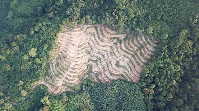 Vista aérea de una zona de bosque deforestada.