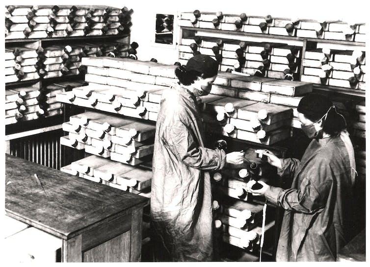 Florey recrutou un equipo de seis mulleres para 'cultivar' penicilina en Dunn School, Oxford. Alcumadas as 'mozas da penicilina', eran seis mulleres. Na foto, dúas delas manipulan un cultivo. Dunn School of Pathology, Oxford.