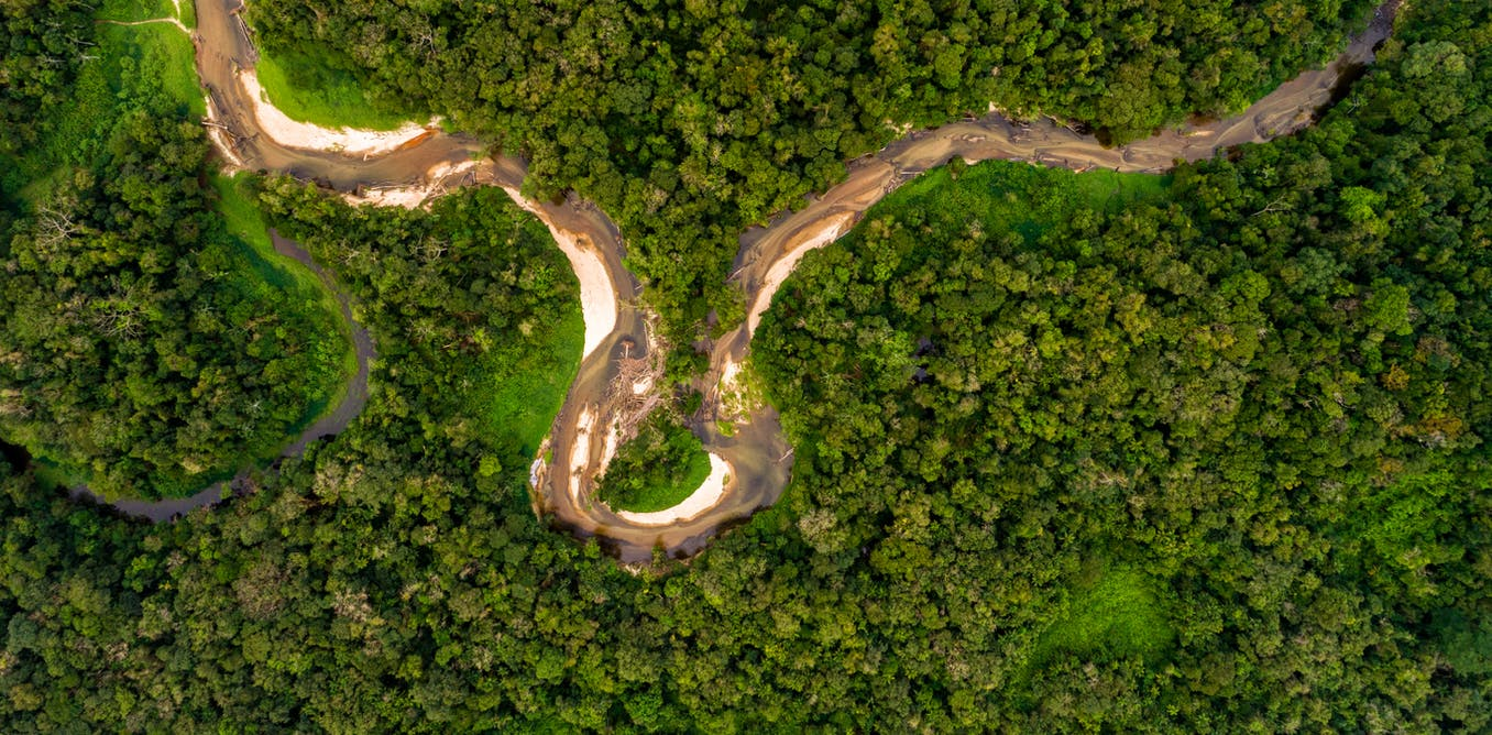 Climate Explained: what would happen if we cut down the Amazon rainforest?