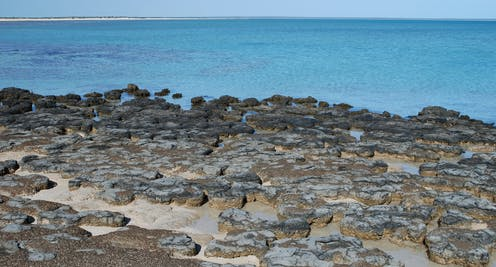 Microbial mats in Shark Bay, WA